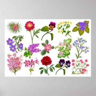 Colorful Flower Sampler Print