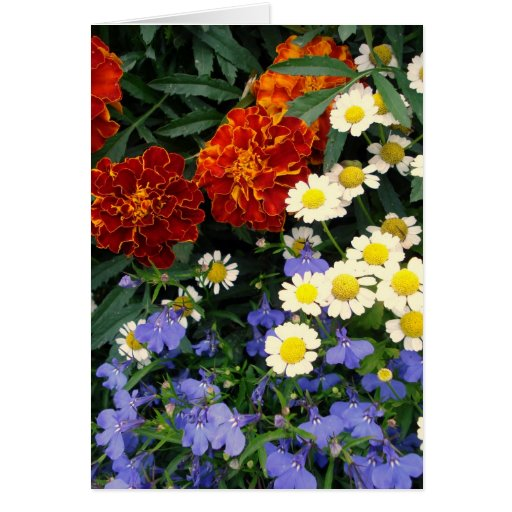 Colorful Flowerbed Card