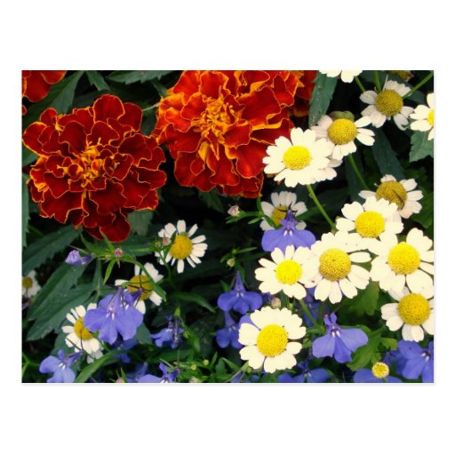 Colorful Flowerbed Post Cards
