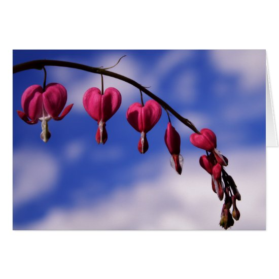 [Colorful Flowers] Bleeding Heart Greeting Card