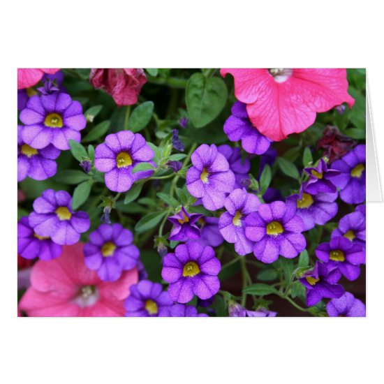 [Colorful Flowers] Calibrachoa  - Any Occasion