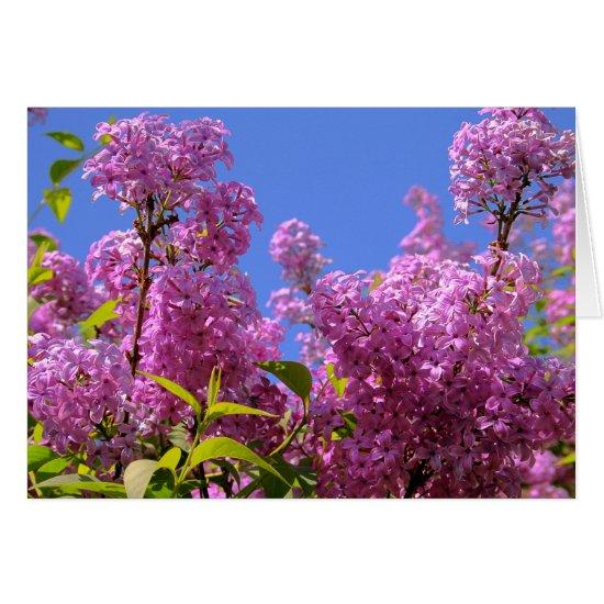 [Colorful Flowers] Lilac Syringa - Greeting Card
