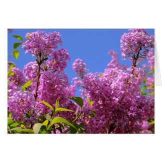 [Colorful Flowers] Pink Lilac Syringa Card