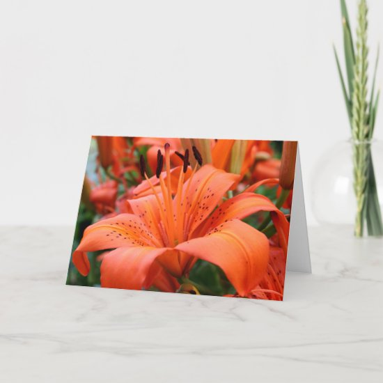 [Colorful Flowers] Tiger Lily  - Any Occasion Card