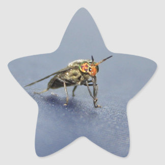 Colorful Fly Closeup Star Sticker