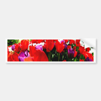 Colorful fowers and nature bumper sticker