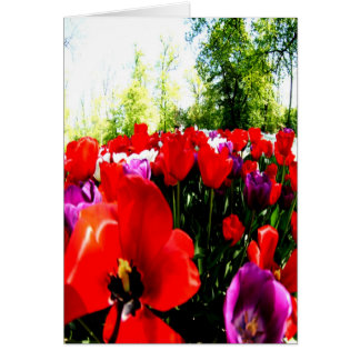Colorful fowers and nature card