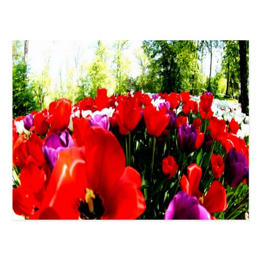 Colorful fowers and nature post cards