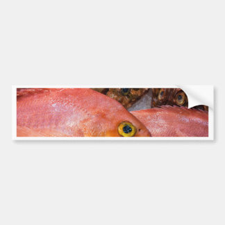 Colorful fresh fish on a market bumper sticker
