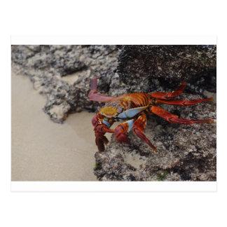 Colorful Galapagos crab post card