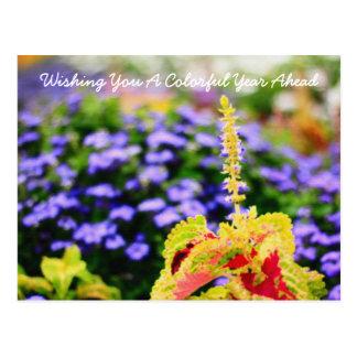 Colorful Garden Scene Variegated Leaves Bluemink Postcards