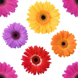 Pink Gerbera Daisy Shower Curtains
