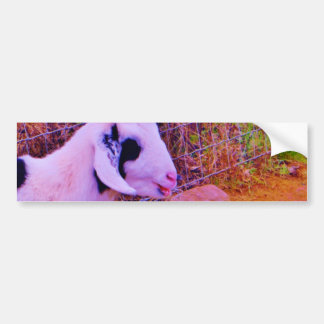 Colorful Goats Bumper Sticker