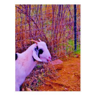 Colorful Goats Postcard