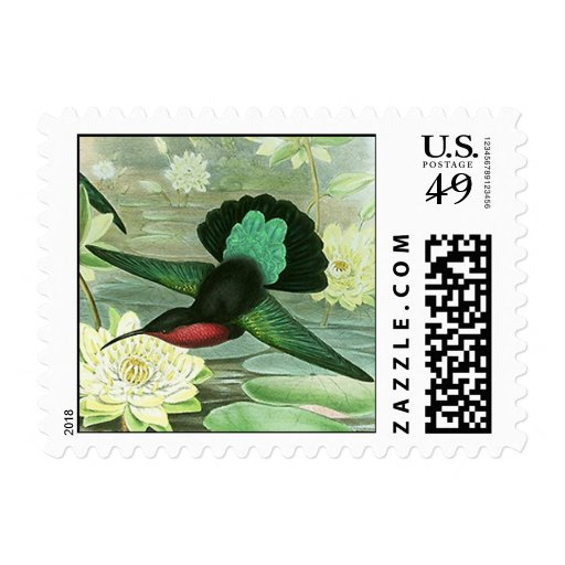 Colorful Gould Hummingbird Postage Stamps Small