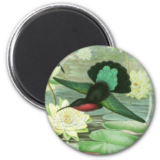 Colorful Gould Hummingbird Waterlilies Magnet
