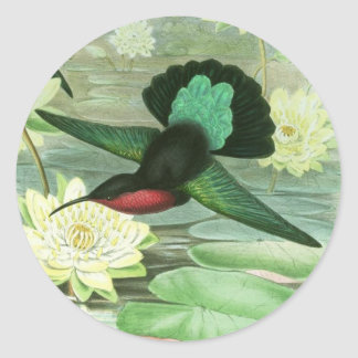 Colorful Gould Hummingbird Waterlily Stickers