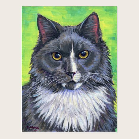 Colorful Gray and White Longhaired Cat Postcard