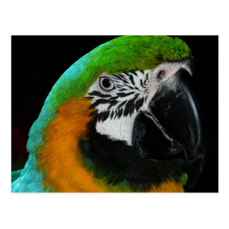 Colorful Green Parrot Postcard