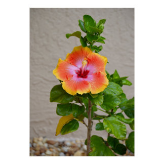 Colorful Hibiscus Flower Print or Poster