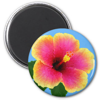 Colorful Hibiscus on Tropical Blue Magnet