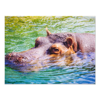 Colorful Hippo In Water, Animal Photography Photo Art