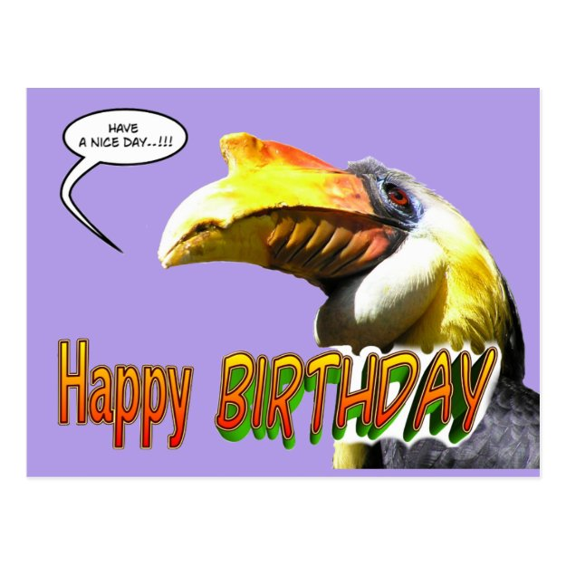 Colorful Hornbill Birthday Postcard