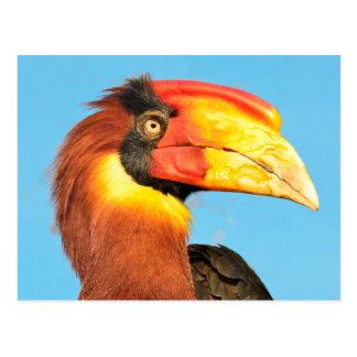 colorful hornbill postcard