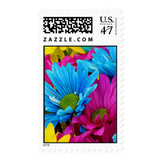 Colorful Hot Pink Teal Blue Gerber Daisies Flowers Postage