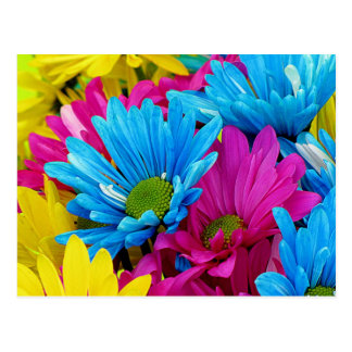 Colorful Hot Pink Teal Blue Gerber Daisies Flowers Postcard