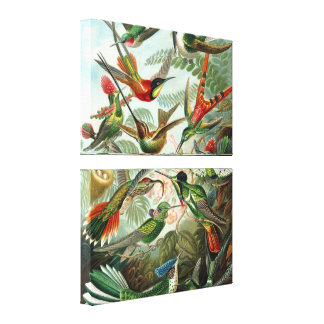 Colorful Hummingbirds Vintage Wrapped Canvas Print