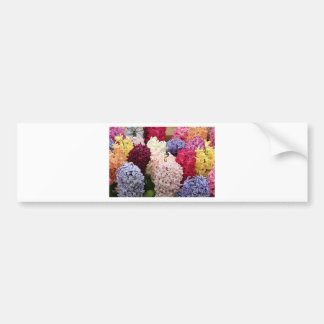 Colorful Hyacinth flowers in bloom 2 Bumper Sticker
