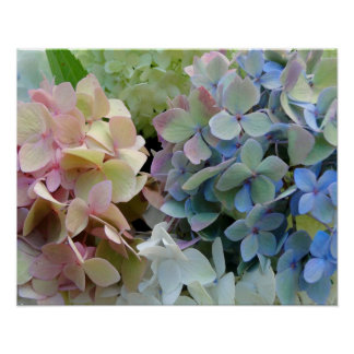 Colorful Hydrangea Bouquet Photography Print
