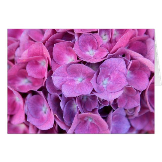 Colorful Hydrangea Flowers Card