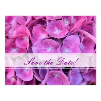 Colorful Hydrangea Flowers Postcards