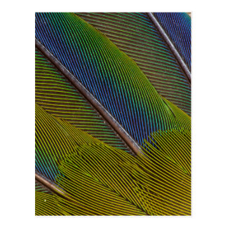 Colorful Jenday Conure Feather Design Postcard
