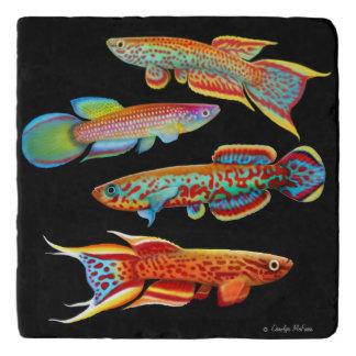 Colorful Killifish Stone Trivet Trivets