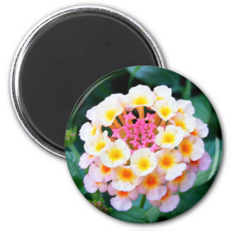 Colorful Lantana Fridge Magnets