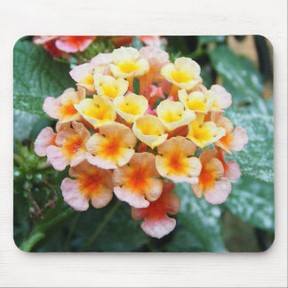 Colorful Lantana Mouse Pad