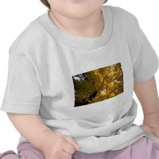 Colorful Large maple tree in the fall T Shirt