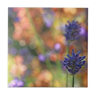 Colorful Lavender Garden Photo Tile