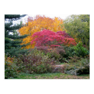 Colorful Leaves Postcards