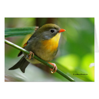 Colorful Leiothrix / Pekin Robin Songbird Card