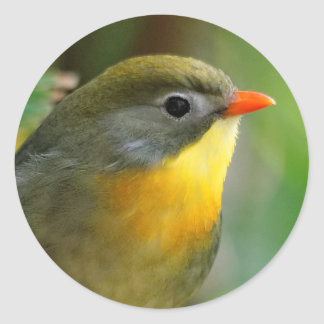 Colorful Leiothrix / Pekin Robin Songbird Classic Round Sticker