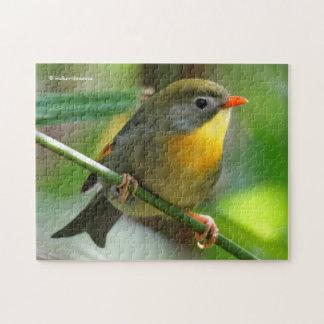 Colorful Leiothrix / Pekin Robin Songbird Jigsaw Puzzle
