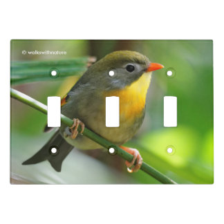 Colorful Leiothrix / Pekin Robin Songbird Light Switch Cover
