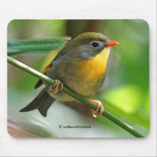 Colorful Leiothrix / Pekin Robin Songbird Mouse Pad