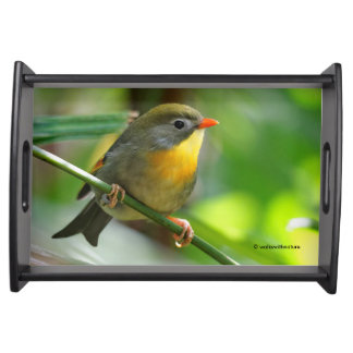 Colorful Leiothrix / Pekin Robin Songbird Serving Tray