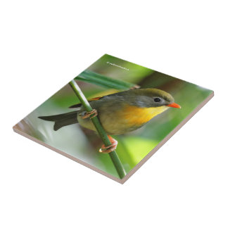Colorful Leiothrix / Pekin Robin Songbird Tile