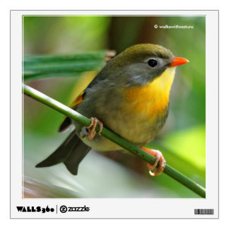 Colorful Leiothrix / Pekin Robin Songbird Wall Sticker